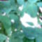 Kép006
