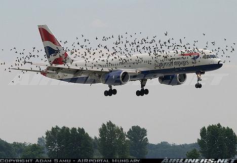 madárrajban