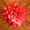 Rózsacsokor (1)