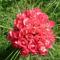 Rózsacsokor (3)