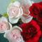 Színes rózsák (18)