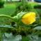 Színes rózsák (20)