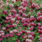 Színes rózsák (45)