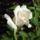 Színes rózsák (68)