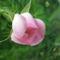 Színes rózsák (86)