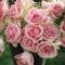Színes rózsák (88)
