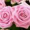 Színes rózsák (90)
