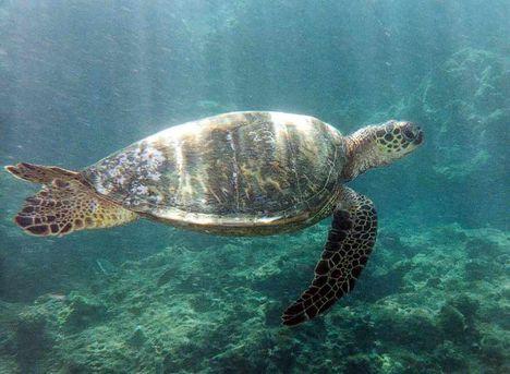 úszik