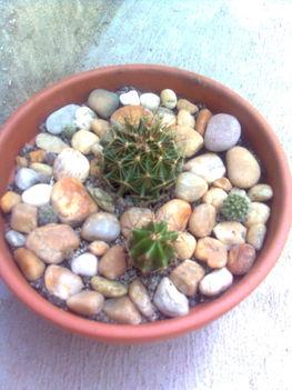 Kaktusztál 1