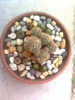 Kaktusztál 2