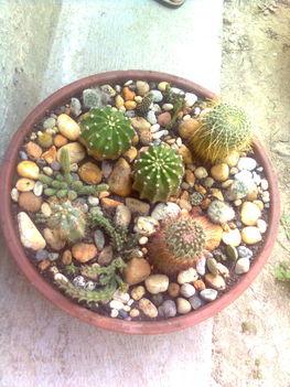 Kaktusztál 3
