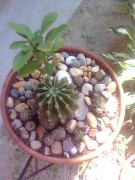 Kaktusztál 4