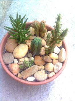 Kaktusztál 5