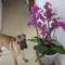 szeretem a virágokat