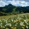 Virágmezők (10)