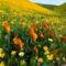 Virágmezők (12)