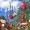 Virágmezők (1)