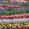 Virágmezők (3)