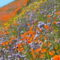 Virágmezők (4)