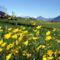 Virágmezők (5)