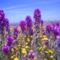 Virágmezők (7)