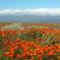 Virágmezők (8)