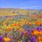 Virágmezők (9)