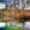 erdőszéli csendélet (foto - levercusec)