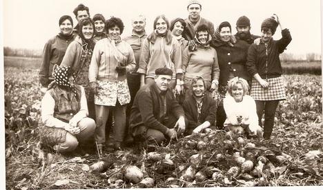 Nagymányoki Tanács dolgozói cukorrépát szednek, 1970-es évek. Tanácselnök: Mózer György, VB-titkár: Reichert Ödön.