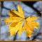 őszi képek8