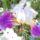 Sárvári Gyuláné - Virágaim, stílusosan