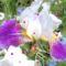 Virágaim, stílusosan-Hajni 1