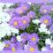 Virágaim, stílusosan-Hajni 2