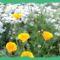 Virágaim, stílusosan-Hajni 4