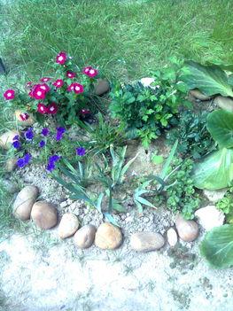 kis kert!