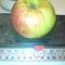alma,mely 62dkg-ot nyom