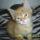 Garfield_325257_11881_t
