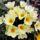 Magocilla virágai