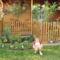Anyósom kertje Küngösön 4