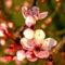 Gyümölcsfák (22)