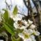 Gyümölcsfák (31)