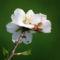 Gyümölcsfák (65)