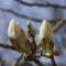 Gyümölcsfák (72)