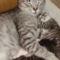 Pamacsom egyik cicája (a másik nem fért rá a képre xD)
