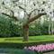 Virágzó fák 10