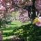 Virágzó fák 11