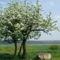 Virágzó fák 14