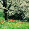 Virágzó fák 16