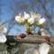 Virágzó fák 2