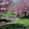 Virágzó fák 3